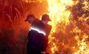 الحرائق أتلفت 21 ألف هكتار سنة 2019
