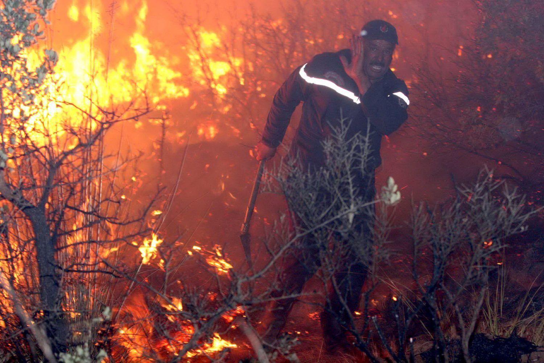 توقيف 3 أشخاص يشتبه تورطهم في حرائق الغابات بتيبازة